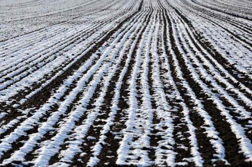 Schnee auf den Feldern in Rheinhessen